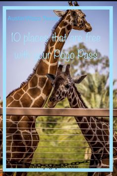 30 Best Pogo Pass Austin Waco Texas Images In 2019 Free