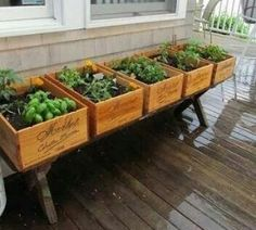 wine #crates  filled with herbes on a #bench wijnkratjes met verse kruiden