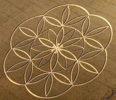 flordavida-cropcircle,1