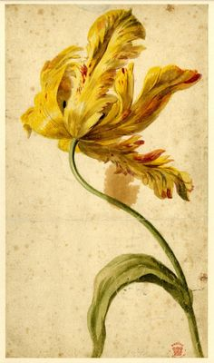 """"""" Watercolours by Jan van Huysum (1697-1749) Flower studies The British Museum See the colection here """""""