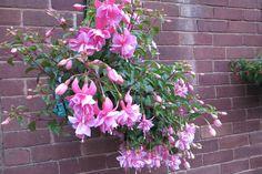 Pink Galore Fuchsia