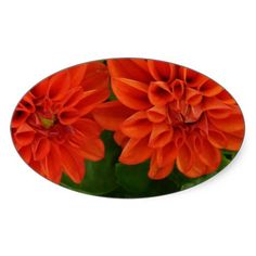 Red Dahlia Stickers from Zazzle.com $7.45 per sheet of 20