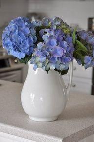 blue hydrangea in white pitcher. Hydrangea Vase, Hydrangea Arrangements, Green Hydrangea, Flower Centerpieces, Centrepieces, Hydrangeas, Do It Yourself Crafts, White Rooms, Cut Flowers