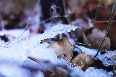 북한산 우이령길, Mt. Bukhan _ snow flakes