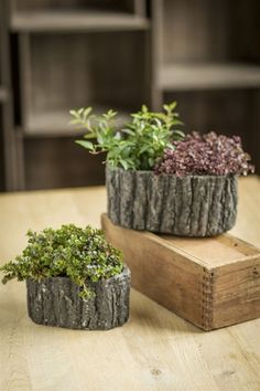 Oval Shaped Ceramic Pots with Bark-Like Detailing by Vagabond Vintage®