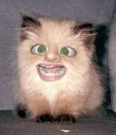 Ideas Cats And Kittens Funny Watches Funny Cat Pictures, Funny Images, Weird Pictures, Funny Pics, Just For Gags, Funny Animals, Cute Animals, Scary Animals, Ugly Cat