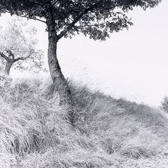 Ray K. Metzker, American, born 1931, Feste di Foglie: Italy, 1985, Gelatin silver print, Image