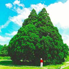 日本の魅力再発見! 行って良かった国内の旅先10選 Golf Courses, Japan, Travel, Beautiful, Viajes, Destinations, Traveling, Trips, Japanese