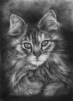 Calico by Peter Williams on ARTwanted