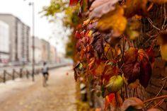 Autumn - Colors of Autumn are wonderful
