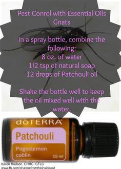 Patchouli as a gnats pest control…now, truly, how versatile are these oils? www.fb.com/changefromtheinsideout #pestcontrol #Gnats #doTerraEssentialOils #Patchouli