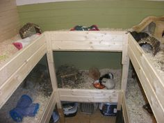DIY cage for Guinea pigs. totally awesome but I Would prob use it as a stand and put coroplast inside the wood, then fleece bedding. Not sure if I would add wire cubes.