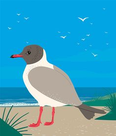 To the seaside - black headed gull -  on Behance