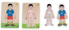 Élő, élettelen környezet 1. hét: Testrészek és funkciójuk A testrészek megnevezése A testrészek feladatai, funkciójuk Az ember és az álla...