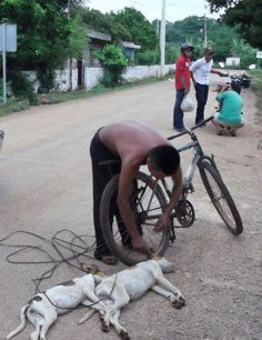 Man Drags Two Puppies To Death With Bike in Mexico Members of animal rights organizations and citizen filed a criminal complaint against a person for tying, hanging, dragging and skinning dogs and cats tying them to a bike. Advised by the local MP, Mauricio Vila Dosal, Caridad Gonzalez Cuervo citizen complaint filed against Rolando NSJ917/13 Cauich Falcon,