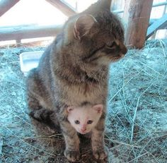Protective and loving Mama and like OMG! get some yourself some pawtastic adorable cat apparel!