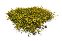10 Free Plants & Flowers PNG Images- at Dzzyn.com - yellow flowers bush