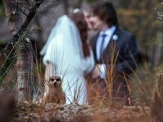A wedding is an exceptionally special day. Sometimes, an opportune photo flub makes the occasion eve