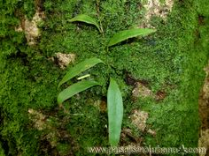 Ecosistemas verticales, trabajo de investigación, Isla Reunión.