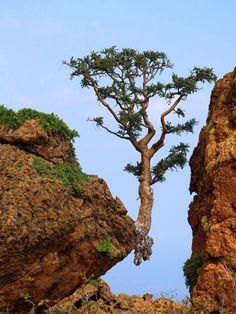 Árbol resistiendo