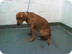 The Davinci Foundation for Animals; Rescue Across the Nation ;FL Miami, FL• Labrador Retriever Mix. Meet LADY BUG, a dog for adoption. http://www.adoptapet.com/pet/12142167-miami-florida-labrador-retriever-mix