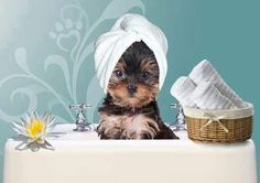 Puppies like spas too. HOW CUTE I S THIS !!!!