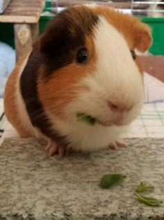 Jimmy Rabbit, Animals, Bunny, Rabbits, Animales, Animaux, Bunnies, Animal, Animais