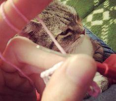 Mirtusz Melinda (@mirtusz_szivderito_alkotasok) • Instagram-fényképek és -videók Animals, Instagram, Animales, Animaux, Animal, Animais