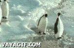 Pingüino cabrón