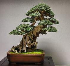 Tree stuff carved into a bonsai, to be considered