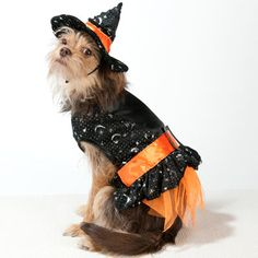 How adorable is this little lady? (Dog Halloween Costume - Discontinued 2012)