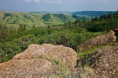 From the Conglomerate Cliffs is a view of the wonderful landscape of the Cypress Hills Interprovincial Park, Saskatchewan. Park Landscape, Landscape Photos, Canadian Prairies, Saskatchewan Canada, Cypress Hill, Canada Travel, Oh The Places You'll Go, Rocky Mountains, Geology