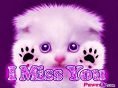 This is 100 of the most romantic 'I miss you' quotes for him and her with sweet I miss you images for girlfriend and boyfriend. I miss you messages for her. I Miss You Cute, I Love You Baby, I Miss U, My Love, Funny Animal Photos, Funny Animals, Miss You Images, Miss You Cards, Photo Chat