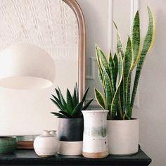 Hier sind die Zimmerpflanzen Bilder, die wir speziell für Sie ausgesucht haben. Genießen Sie unsere Bildergelerie und dann haben wir einige Tipps für Sie...