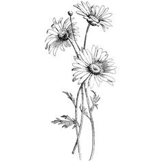 Field Daisies 1331M - Beeswax Rubber Stamps