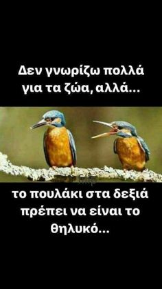 Funny Greek Quotes, Homemade Beauty Tips, Just For Laughs, Funny Photos, Picture Video, Funny Jokes, Lol, Memes, Laughing