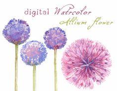 Digital Clipart, Watercolor Flowers, Flower Clipart, Allium, Watercolor Clipart