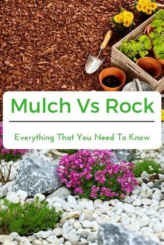 Mulch Vs Rock – Everything That You Need To Know