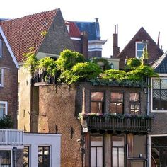 Terrace/balcony with lots of plants - rooftop garden #rooftopgardens