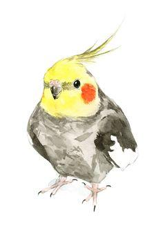 Cockatiel watercolor painting  bird watercolor painting by Birdink