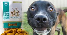 "By Claire Bernish | The Free Thought Project Dogs are now benefiting from cannabidiol, or CBD, to treat everything from pain and hip dysplasia to cancer and epilepsy — even though the product absurdly remains classified as a Schedule 1 narcotic. ""Most of the pet owners that are using the product..."