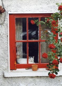 Window Cat with Red Roses ....