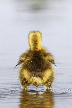 ducky butt