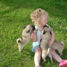 Little girl with pug puppies