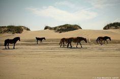wild horses by J. Paul Mashburn <2010>