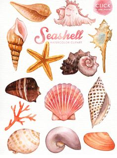 The set of high quality hand painted watercolor seashell and elements images in bright and fresh color palette. What do you get: 16 x Hand painted watercolor Watercolor Clipart, Coral Watercolor, Watercolor Illustration, Watercolor Paintings, Watercolor Wedding, Watercolour, Art Clipart, Watercolor Tattoo, Art Postal