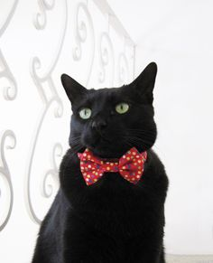 Cat Bow Tie - Confetti Spots on Red.