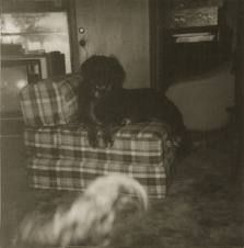 real ghost and apparitions - Google Search
