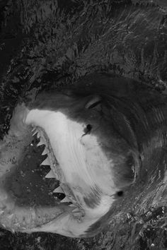 #shark #sea #black #white #wild #ocean