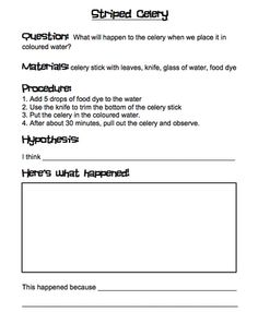 Celery Experiment | Celery, Worksheets and Experiment
